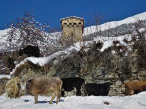 Svaneti Snowshoeing Tours